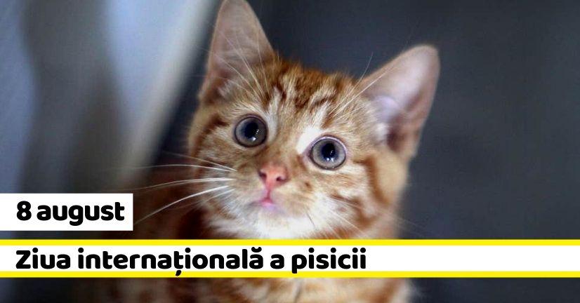 Eveniment - 1 iunie - Ziua Internațională a Copiilor - YouTube |Ziua Internațională A Pisicii