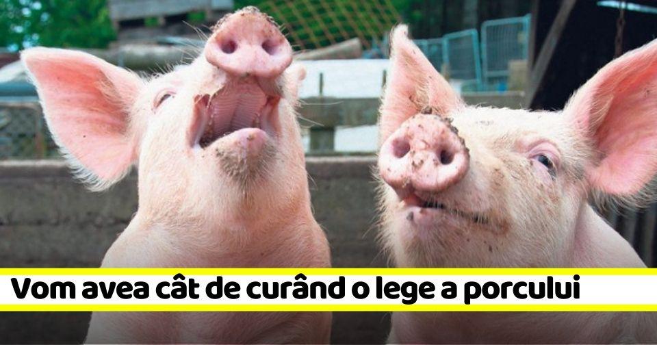 """""""Legea porcului"""" va schimba radical modul în care aceștia vor fi crescuți în gospodărie"""